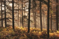 Fern Forest Fine Art Print