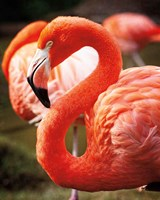 Flamingo III Fine Art Print