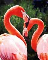 Flamingo II Fine Art Print