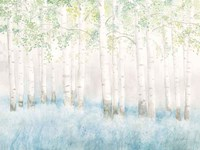 Soft Birches Fine Art Print