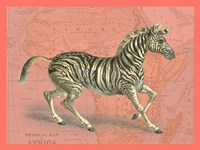 African Animals on Coral III Fine Art Print