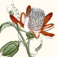 Cropped Antique Botanical VI Fine Art Print