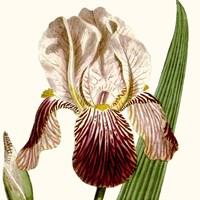 Cropped Antique Botanical VIII Fine Art Print