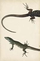 Lizard Diptych I Fine Art Print