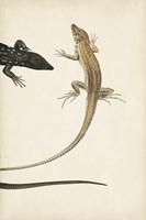 Lizard Diptych II Fine Art Print