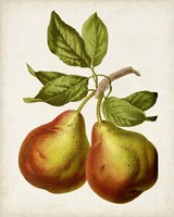 Antique Fruit XI Fine Art Print
