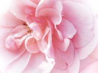 Pretty Pink Blooms IV Fine Art Print