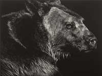 Wild Scratchboard II Fine Art Print