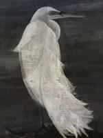 Textured Egret II Fine Art Print