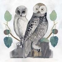 Traditional Owls I Fine Art Print