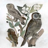Traditional Owls II Fine Art Print