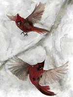Cardinals I Fine Art Print