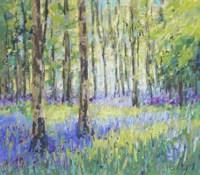 Bluebell Woods Fine Art Print