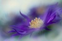 Gold & Purple in the Mist I Fine Art Print