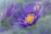 Gold & Purple in the Mist II Fine Art Print