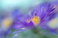 Gold & Purple in the Mist IV Fine Art Print