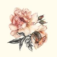 The Light of Day Rose II Fine Art Print