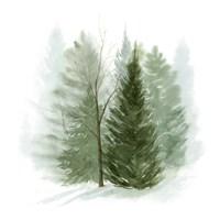 Walk in the Woods I Fine Art Print