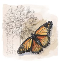Shadow Box Butterfly I Fine Art Print