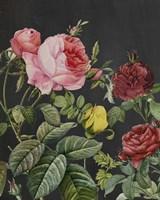 Redoute's Bouquet I Fine Art Print
