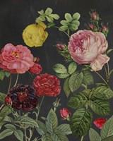 Redoute's Bouquet II Fine Art Print