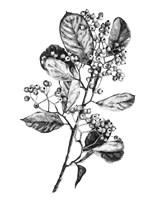 Hawthorn Berry Branch I Fine Art Print