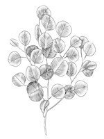 Eucalyptus Sketch II Fine Art Print