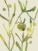 Spring Sprig II Fine Art Print