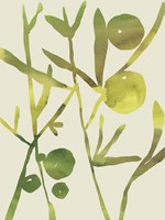 Spring Sprig III Fine Art Print