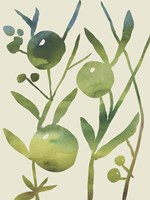 Spring Sprig IV Fine Art Print