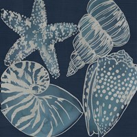 Marine Shells I Fine Art Print