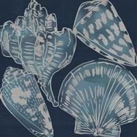 Marine Shells II Fine Art Print