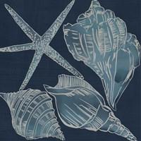 Marine Shells III Fine Art Print