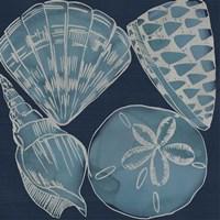 Marine Shells IV Fine Art Print