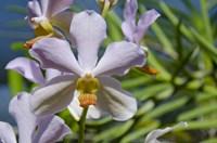 Jenny's Orchid Garden 1, Darwin, Australia Fine Art Print