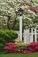 Pickett Fence, Lamp, Azaleas, And Flowering Dogwood Tree, Louisville, Kentucky Fine Art Print