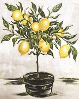 Lemon Tree Fine Art Print