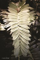 Sunkissed Fern Fine Art Print