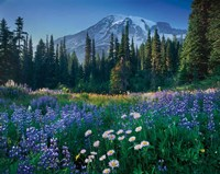 Mount Rainier Fine Art Print