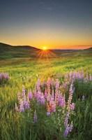 Prairie Sunrise Fine Art Print