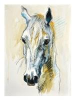 Horse Head Fine Art Print