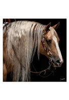 Platinum in Bridle Fine Art Print