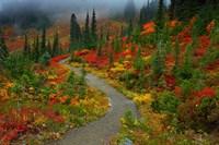 Foggy Trail, Mt. Rainier Fine Art Print