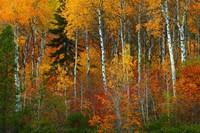 Wenatchee National Forest, WA Fine Art Print