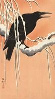 Crow on a Snowy Bough, 1900-1930 Fine Art Print