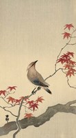 Japanese Waxwing on Maple, 1900-1936 Fine Art Print