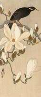 Myna on Magnolia Branch, 1900-1910 Fine Art Print