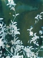 Dark Garden Fine Art Print