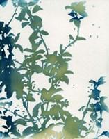 Shadow Floral Fine Art Print