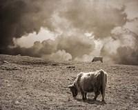 Scottish Highland Cattle No. 1 Fine Art Print